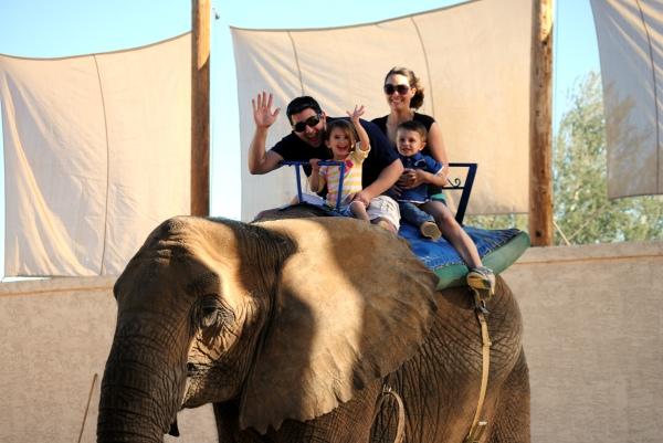 Elephant Ride Renaissance Festival